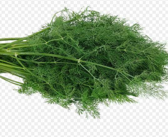 companion plants for kale: Dill