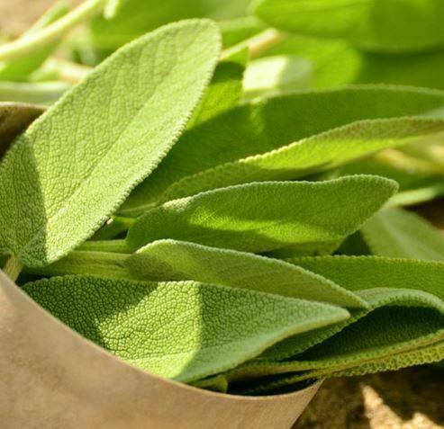companion plants for kale: sage